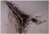 Przed zastosowaniem, czarny nalot na ścianie i fugach